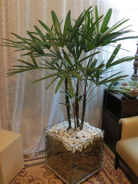 Arranjo com Palmeira Ráfis | Palmeira rafis, Plantas para ...