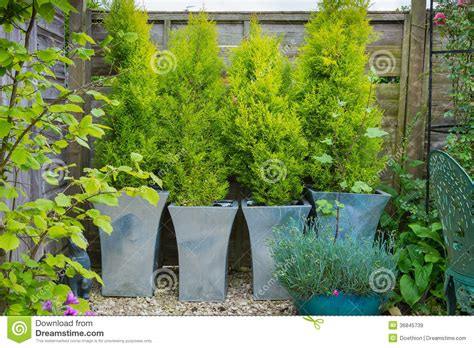 garden with evergreen trees in containers stock image