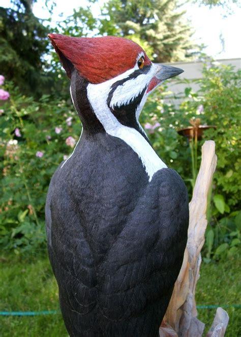 pileated woodpecker basswood bird tupelo  mahogany
