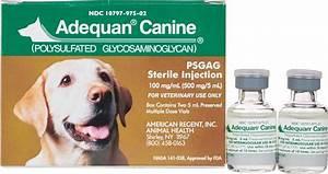 Adequan Canine Sterile Injection Novartis Animal Health
