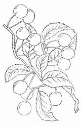 Embroidery Pattern Clip Cherry Patterns Sewing Fairy Coloring Pages Designs Graphics Hand Stitches Printable Line Thegraphicsfairy Fruit Drawing Dibujos Colouring sketch template