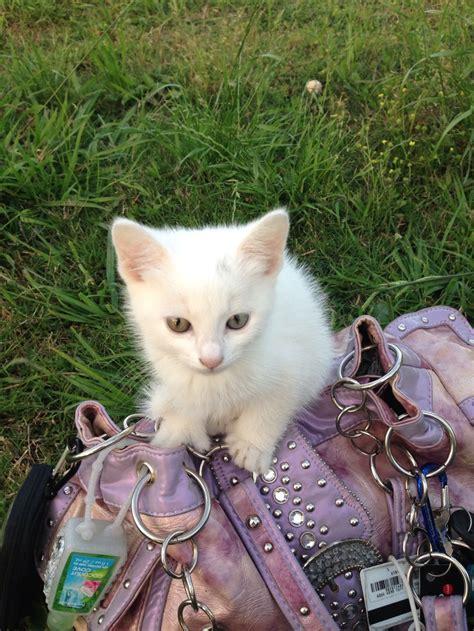 hemingway cats hemingway cat hemingway cats papa