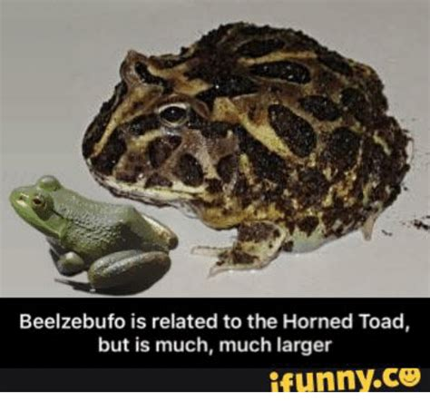 Horny Toad Meme - beelzebufo is related to the horned toad but is much much larger ifunnyco toad meme on me me