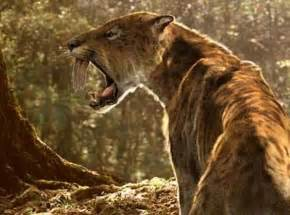 saber toothed cat saber toothed cats wrestled prey with powerful arms