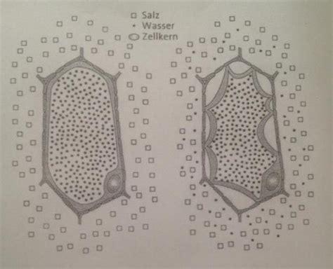 was ist diffusion kann mir jemand diffusion biologie plasmolyse anhand dieser abbildung erkl 228 ren zellmembran