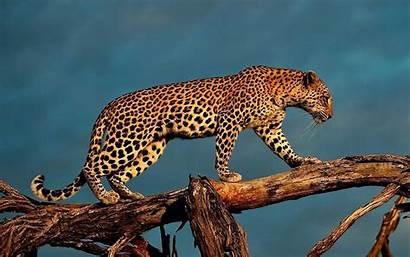 Wildlife Wallpapers Screensavers 1000 1600a