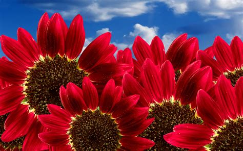 May Flowers Free Wallpaper Wallpapersafari