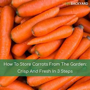 How to store carrots from the garden crisp and fresh in 3 for How to store carrots from the garden