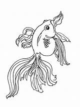 Coloring Goldfish Fish Printable Recommended Goldfishes sketch template