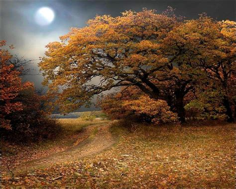 3d Wallpapers Trees by 3d Fall Wallpapers Wallpaper Cave