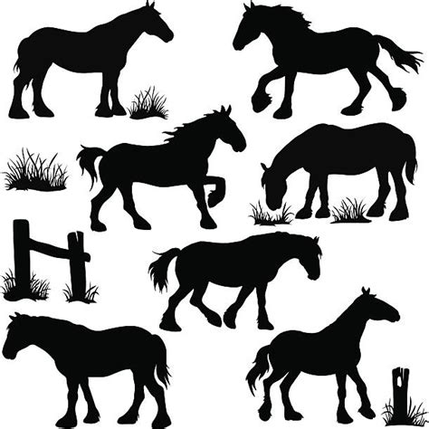 draft horse illustrations royalty  vector