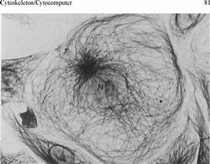 The Nature of Cytoplasm - Tunneling Microscopy - Texas ...