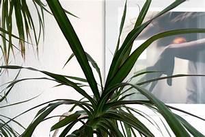 Palmen Für Die Wohnung : orchideen sukkulenten palmen ein dschungel f r zu hause ~ Markanthonyermac.com Haus und Dekorationen