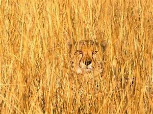 10 Animals In Camouflage