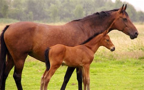 important nutrition tips   healthy foal readysupp