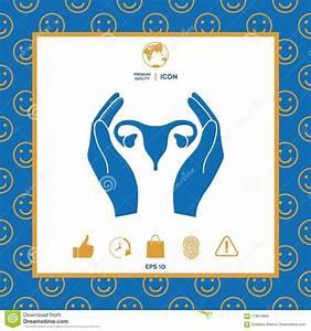 Hands Holding Female Uterus