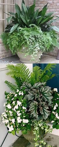 best patio plants design ideas Pool Pots Around Waterfall Gardening Layout Best Plants Ideas On Pinterest Landscaping ...