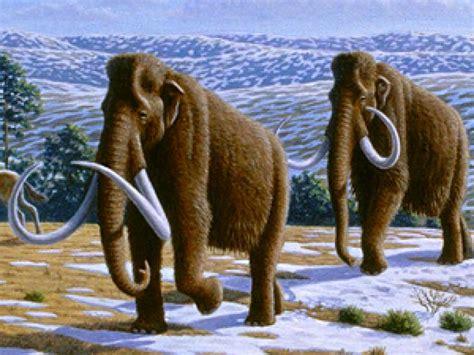 los mamuts tenian sangre anticongelante