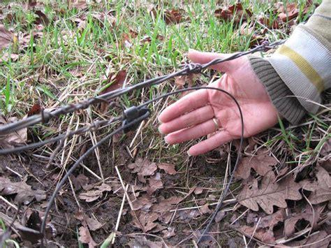 pets caught  illegal traps knysna plett herald