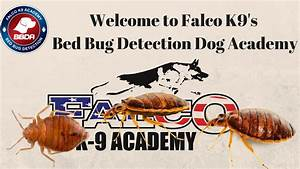 bed bug detection dog training dog beds and costumes With bed bug training