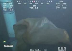 Bizarre sea creature caught on Gulf rig camera (video ...