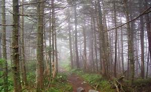 The Long Trail is a hiking trail located in Vermont ...
