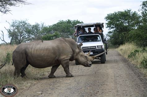 Reviews Hluhluwe Umfolozi Game Reserve South Africa
