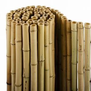 Gartenhaus Abstand Zum Nachbarn : bambus sichtschutz natur 3 gr en phyllostachys ~ Lizthompson.info Haus und Dekorationen