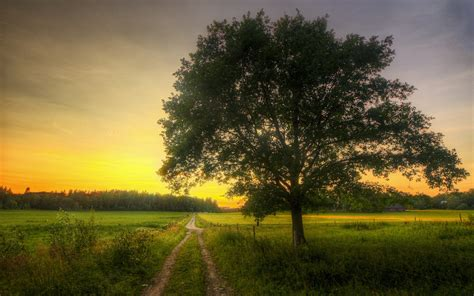 fonds decran champs route arbre matin printemps