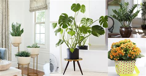 best small indoor plants low light best small houseplants the best small house plants arts