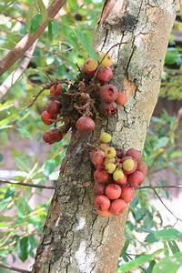Feigenbaum Im Garten : exotische fr chte im heimischen garten garten blog ~ Orissabook.com Haus und Dekorationen