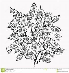 Jasmine Flower. Vintage Elegant Flowers. Black And White ...