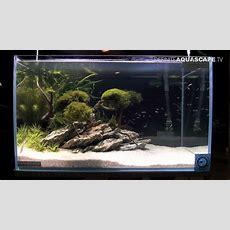 Aquascaping  Aquarium Ideas From Zoobotanica 2013, Pt6
