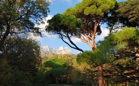 วอลเปเปอร์ : ต้นไม้, แนวนอน, ภูเขา, ถิ่นทุรกันดาร, ป่าฝน ...
