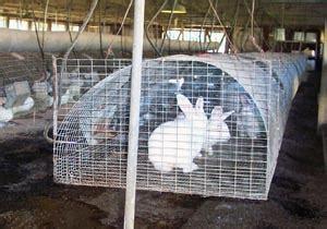 animal husbandry rabbit