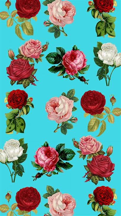 Iphone Floral Wallpapers Plus Pretty Flower Roses