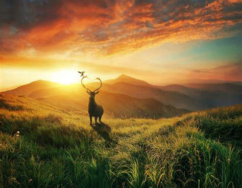 landscape sunset deer mountains bird desktop wallpapers