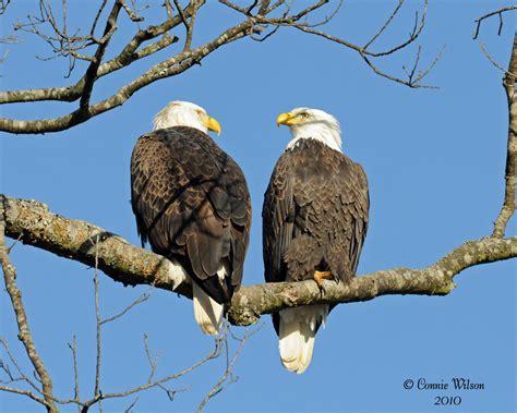 Eagle Blog  Fort Donelson National Battlefield (us