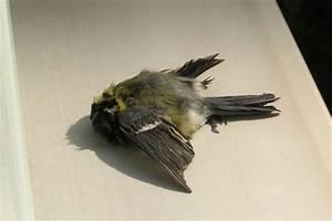 Viele Fliegen Am Fenster : vogeltod am fenster projektpartner gesucht lbv ~ Orissabook.com Haus und Dekorationen