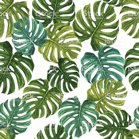 monstera leaf vector pattern stock vector art
