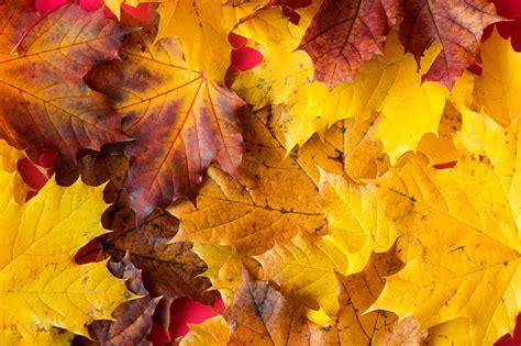 Free photo: Autumn Leaves - Autumn, Fall, Leaves - Free ...