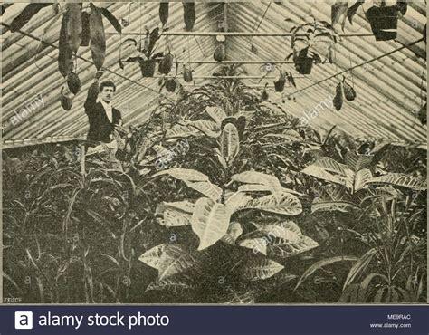 heizung für gewächshaus pflanzengattung stock photos pflanzengattung stock images alamy