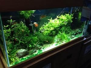 Optimale Aquarium Temperatur : best temperature for tropical fish tank aquariums tropical fish site ~ Yasmunasinghe.com Haus und Dekorationen