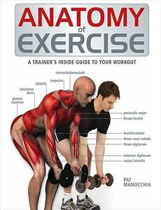 Anatomy Of Exercise  A Trainer U0026 39 S Inside Guide To Your