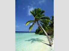 Maldives State Symbols, Song, Flags and More Worldatlascom