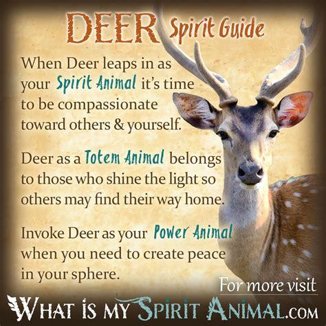 Deer Symbolism & Meaning