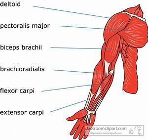 Human Anatomy Clipart