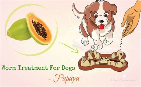 tips  natural intestinal worm treatment  dogs