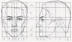 head-anatomy-proportions-1 | PacificGraphicDesign