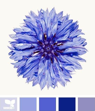 cornflower color best 25 cornflower blue weddings ideas on